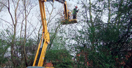 Tree removals - Mwh global uk head office ...